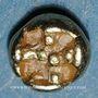 Münzen Ionie. Dynaste incertain (vers 600-550 av. J-C). 1/48 statère